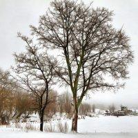 зима.... :: Ольга Cоломатина