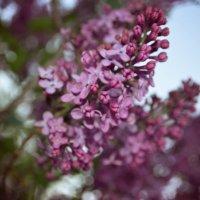 spring time) :: Алина Давыдова