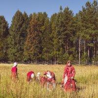 Праздник урожая :: Виктор Заморков