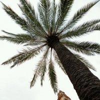 Просто пальма ) :: Мария Разоренова