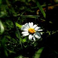 Солнечный лучик осветил . :: Мила Бовкун
