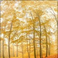И снова Осень.... :: Юрий Гординский
