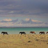 Краски западной Монголии :: Дмитрий Сенотрусов