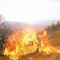 Сжигает осень все мосты.. :: Андрей Заломленков