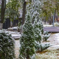 Голубые ели в снегу :: Игорь Герман