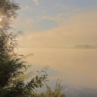 Туманное утро :: Татьяна Шаклеина