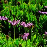 цветы :: Татьяна Васильева