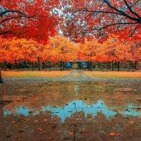 Снова осень :: Gene Brumer