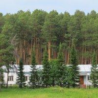 Дом у леса :: Вера Щукина