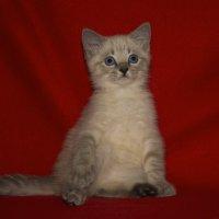 Котёнок :: Виктор (Victor)