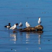 Посиделки на озере. :: Владимир Лазарев