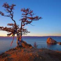 Священное дерево в лучах заката :: Анатолий Иргл