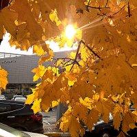 Осенним,солнечным днем :: Елена Семигина