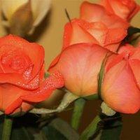 Розы в подарок :: Татьянка *