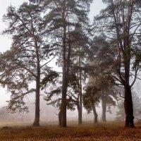 Опушкой леса параллельный мир... :: Лесо-Вед (Баранов)