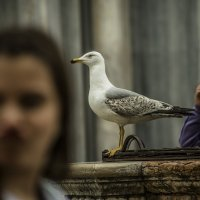 Venezia. Piazza S.Marco. :: Игорь Олегович Кравченко
