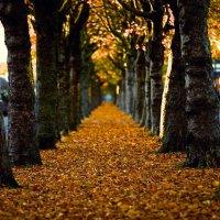Осень - летнее послевкусие. :: Лилия .