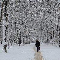 По первому снегу :: Наталья Кузнецова