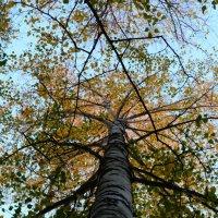 Ввеpх, в голубые небеса. :: Анастасия Быкова