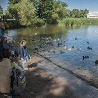 балтийские птицы и туристы :: павел бритшев