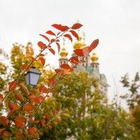 Осень :: Николай Прийменко-Эйсымонт