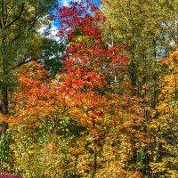 Осенние краски 3 :: Сергей Филатов