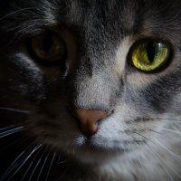 Кошачий глаз :: Екатерина Рябова