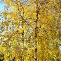 Золотая осень, золотая..... :: Анастасия Фомина