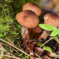 В сентябрьском лесу :: Татьяна Соловьева