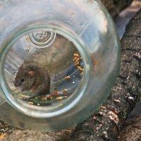 Сегодня я поймала мышку для фотосессии :: Наталья S