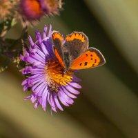 Малыши на цветке :: Павел Руденко