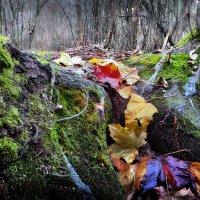 Брутальность ноябрьского леса.... :: Андрей Войцехов