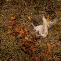 Осенняя кошка :: Александра