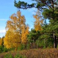 Осенний сибирский пейзаж :: Сергей Шаврин
