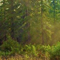Просыпается лес :: Сергей Чиняев