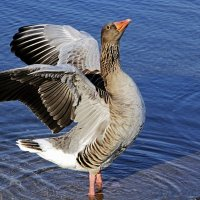Я гордый птиц :: Alexander Andronik