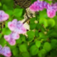 Когда весну чувствуют все... :: Анжелика Филимонова