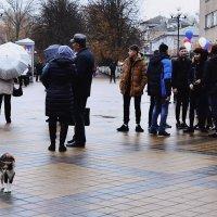 Пришла митинговать :: Владимир Болдырев