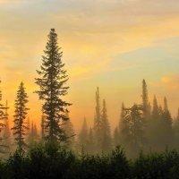 На рассвете в пихтовом лесу :: Сергей Чиняев