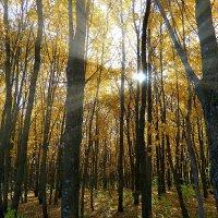 Как быстро осень пролетела золотая.. :: Андрей Заломленков