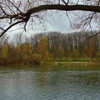У осени поздней - усталая нежность.... :: Galina Dzubina