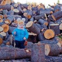Заготовка дров :: Максим Кочетков