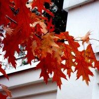 Ноябрьские листья :: Marina Bernackaya Бернацкая