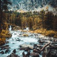 В лесу :: Тимофей Ракшин