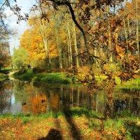 Гляделась осень в зеркало воды... :: Самохвалова Зинаида