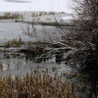 первый лед р.Добрянка. :: petyxov петухов