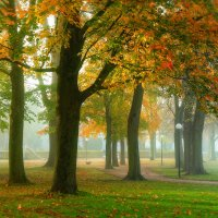 В туман, как в омут, тянет окунуться, Побегать по траве и по росе. :: Юрий. Шмаков