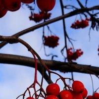 Осенние краски погожих дней :: Леонид Абросимов