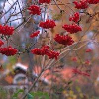 Я положу калины гроздь у двери... :: liudmila drake