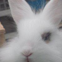 кролик :: Зинаида